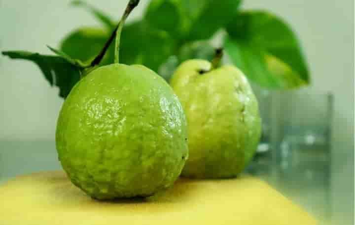 अमरूद खाने के फायदे और नुकसान – Guava/amrud Khane ke Fayde aur Nuksan in Hindi