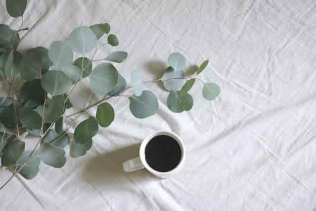 नीलगिरी तेल के फायदे, उपयोग और नुकसान - Nilgiri Tel Ke Fayde, Upyog Aur Nuksan (Benefits, Uses And Side Effects of Eucalyptus Oil in Hindi)
