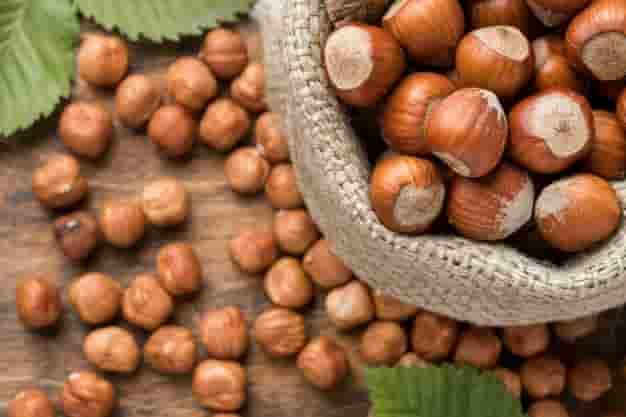 हेजलनट्स के फायदे, उपयोग और नुकसान – Hazelnut Ke Fayde, Upyog Aur Nuksan (Uses, Side Effects and Benefits of Hazelnut in Hindi)